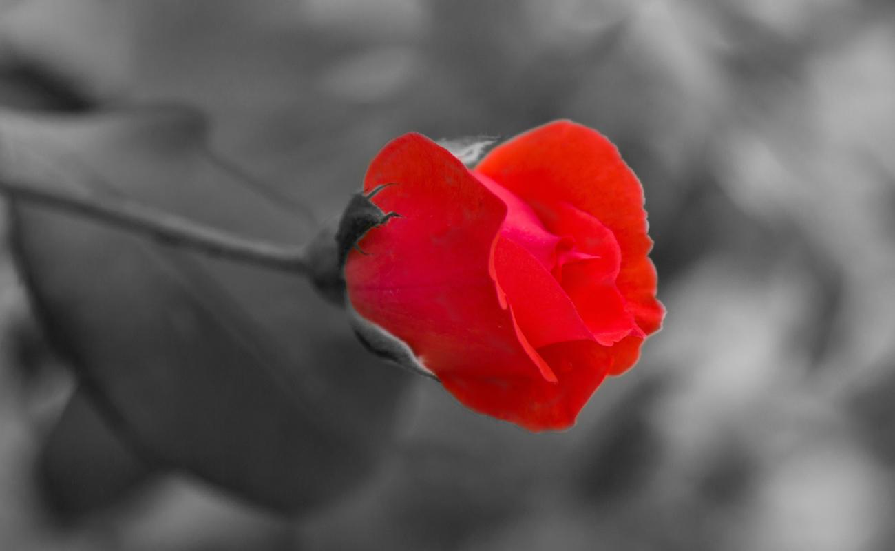 Traitement d'image numérique d'une fleur